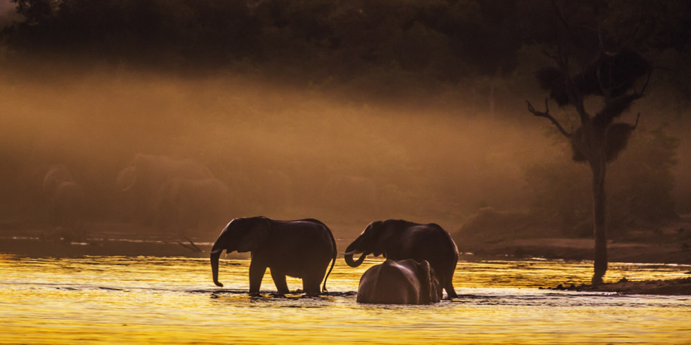 Experience the Kruger