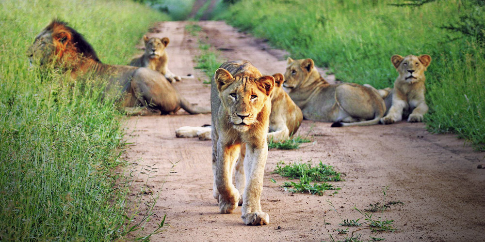Big Five Wildlife Experience