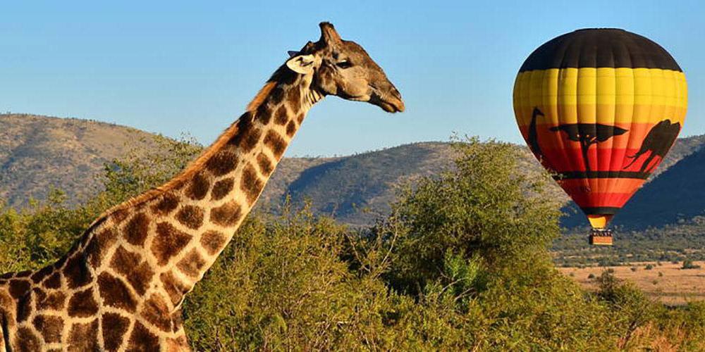 Pilanesberg, a world-class experience on our doorstep