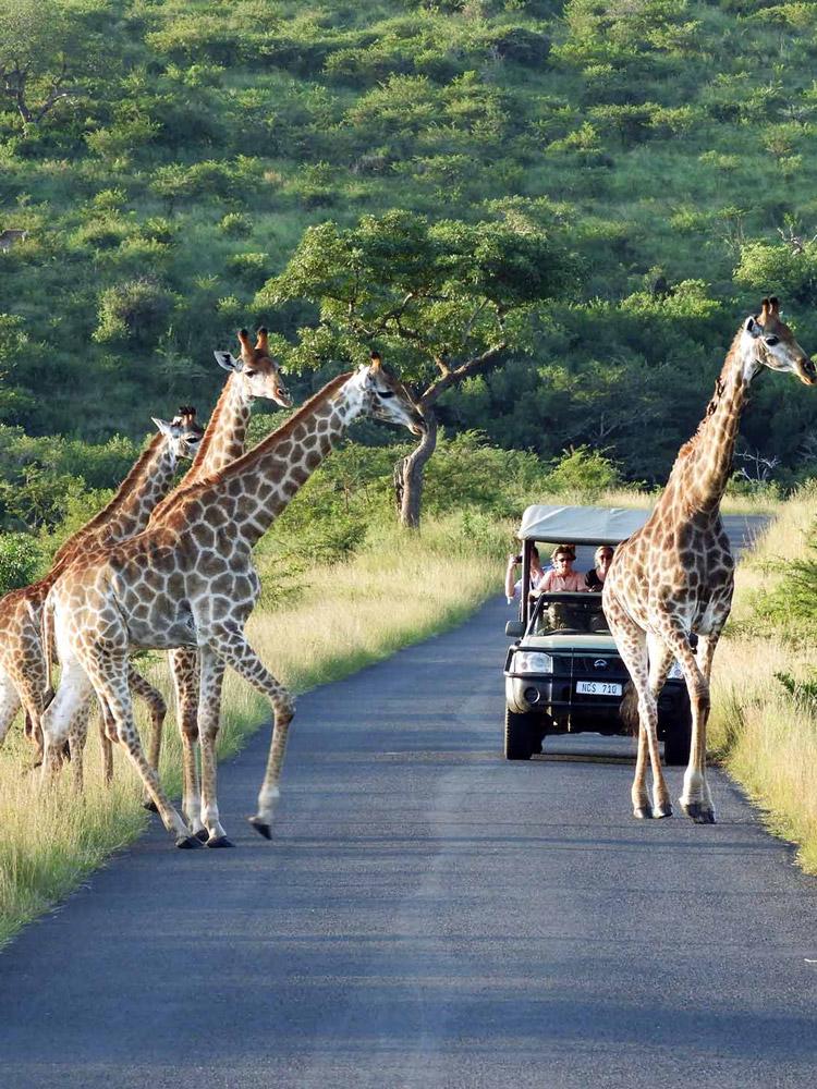 kzn safaris
