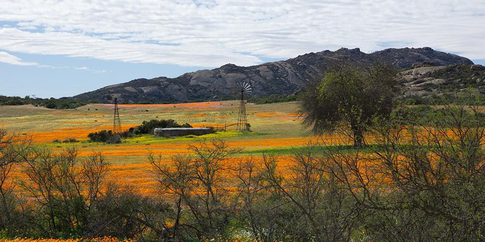 Namaqualand Flower Adventure